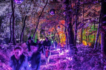 One of the Violet pathways with mirror balls at Magical Woodland https://www.magicalwoodland.com