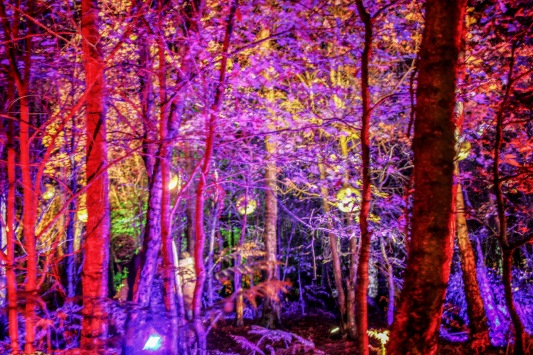 Violet trees at Magical Woodland https://www.magicalwoodland.com