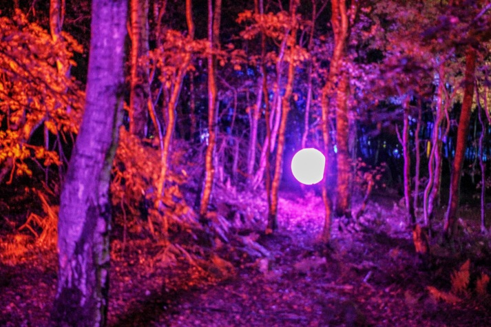 A beautiful mock moon through Violet trees Magical Woodland https://www.magicalwoodland.com