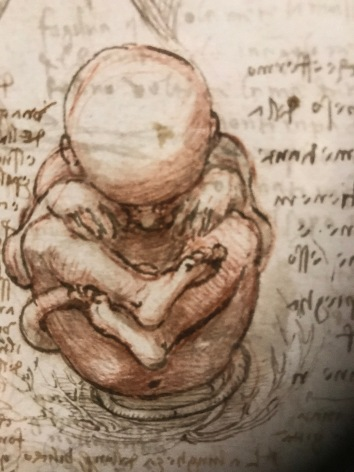 Leonardo's sketches of how the foetus develops in the womb
